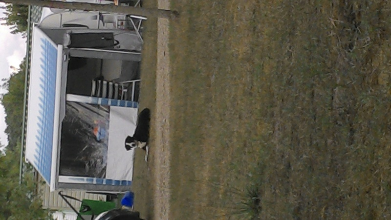 race de chien Img_2012