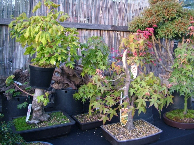 DRAGON BONSAI BOOT SALE AND AUCTION SUNDAY 8th OF SEPTEMBER Dscf0751
