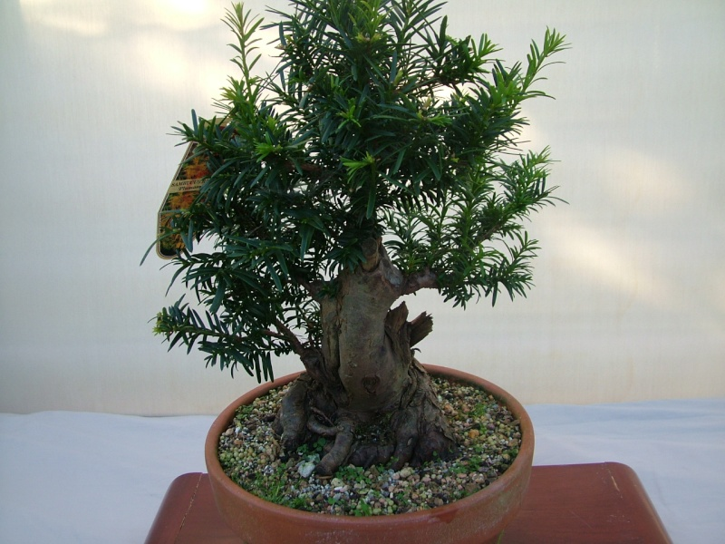 DRAGON BONSAI BOOT SALE AND AUCTION SUNDAY 8th OF SEPTEMBER Dscf0764