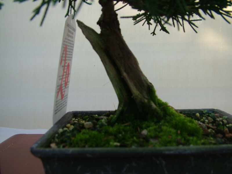DRAGON BONSAI BOOT SALE AND AUCTION SUNDAY 8th OF SEPTEMBER Dscf0771