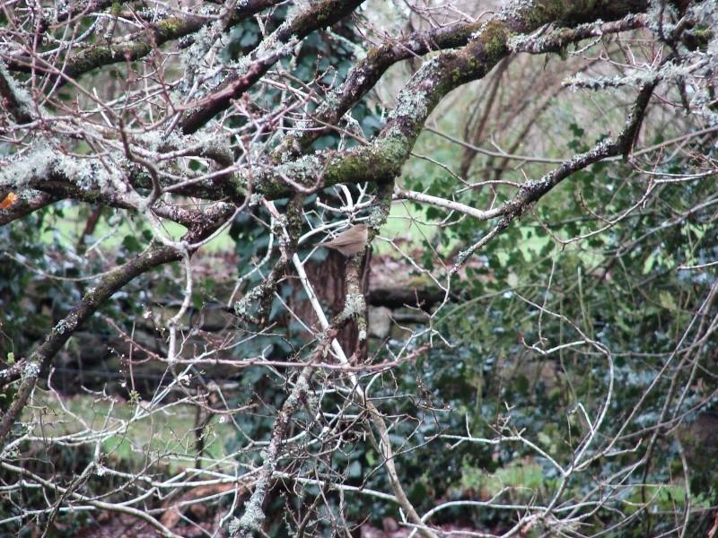 Identification oiseaux Dsc08811