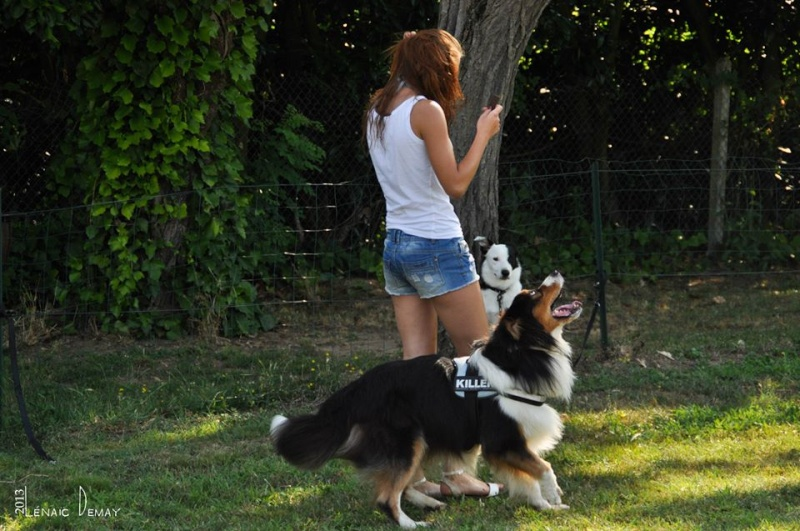 Rencontre canine 2010