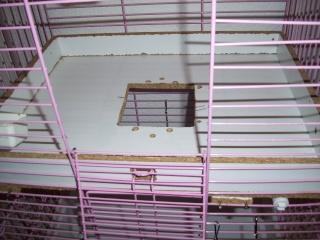 vend  cages news édité p.1 00312