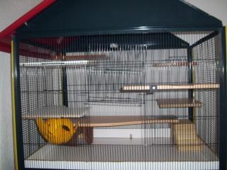 mes cages... et la pièce de vie  - Page 5 00313