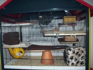 mes cages... et la pièce de vie  - Page 5 03010