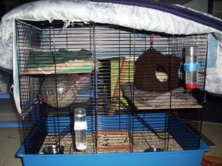 mes cages... et la pièce de vie  - Page 4 28_02_10