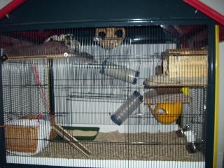 mes cages... et la pièce de vie  - Page 4 28_02_11