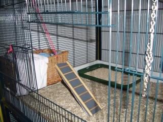 mes cages... et la pièce de vie  - Page 4 28_02_12
