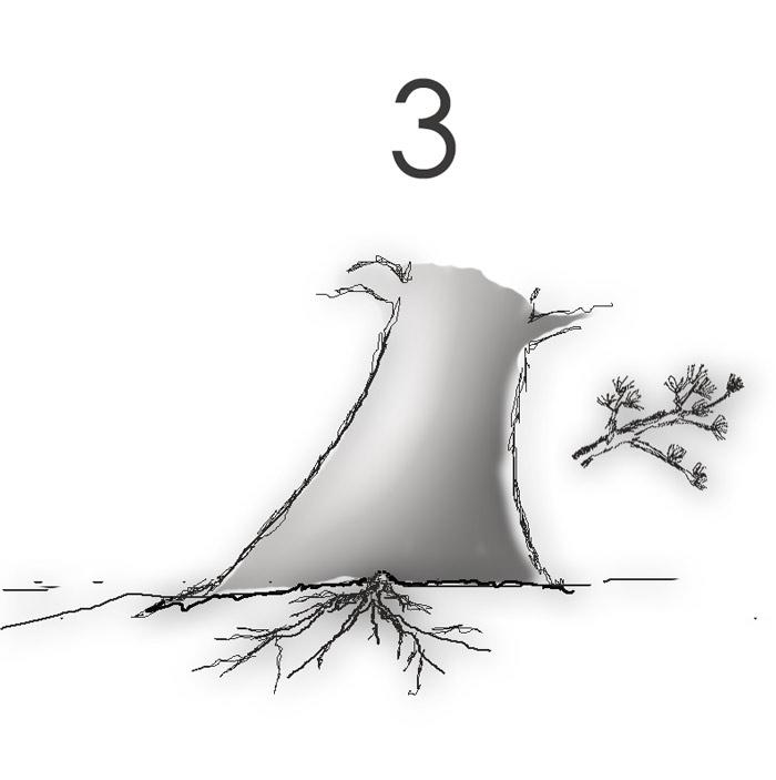Scots pine Root310