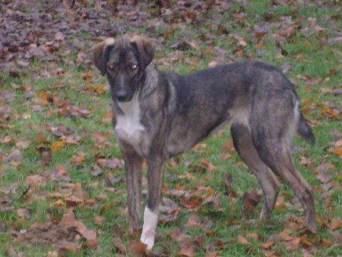octobre 2010 Dora2010