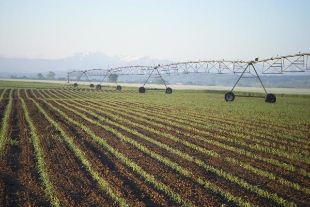 choix de rampe d'irrigation Dscf1112