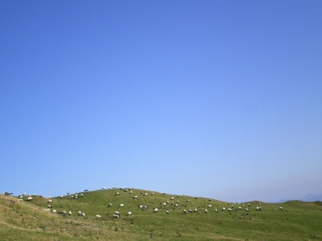 Les moutons Imgp0620