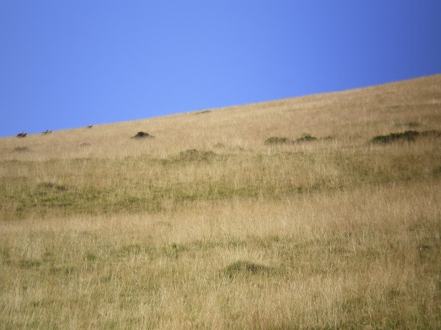 Les moutons Imgp0621