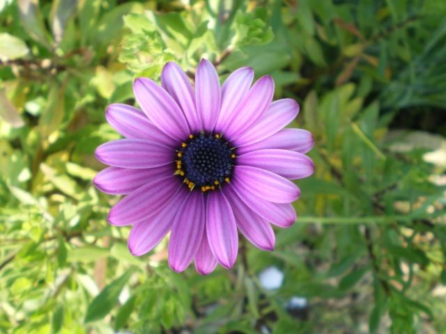 floraisons macro Le_13_13