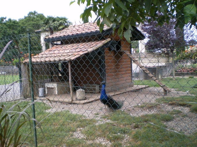 les maisons des animaux... Pays_b10