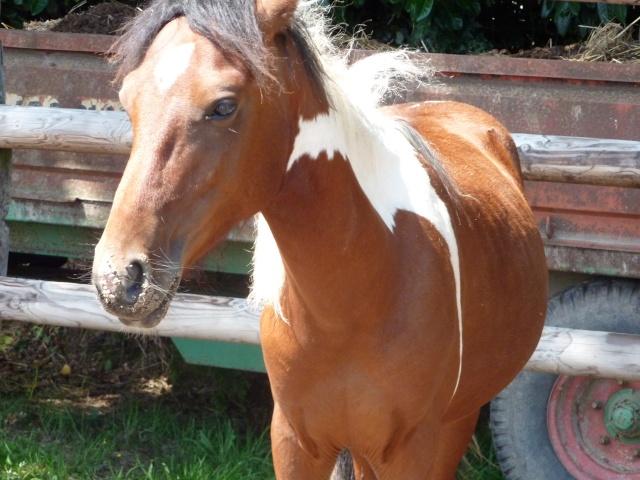 Les chevaux peuvent-ils avoir des verrues ? P1000010