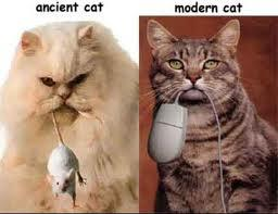 HUMOUR : le chat dans tous ses états 0_chat10