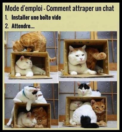 HUMOUR : le chat dans tous ses états 0_chat11