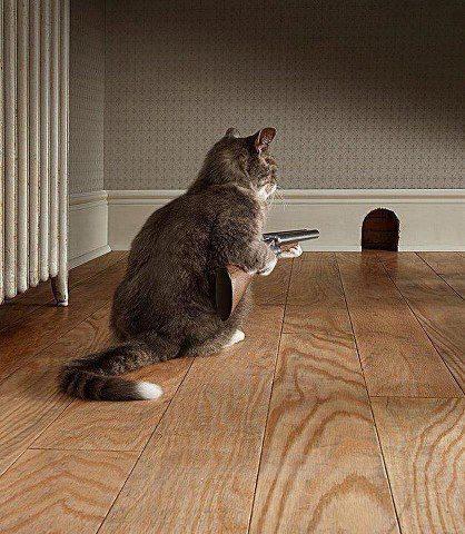 HUMOUR : le chat dans tous ses états - Page 6 0_chat14