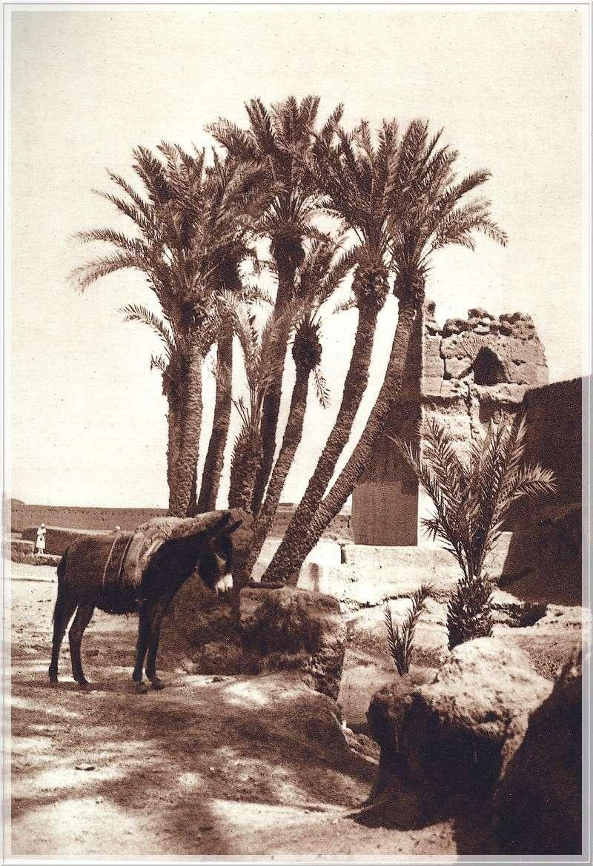 La Féerie Marocaine - Page 5 Scan_135