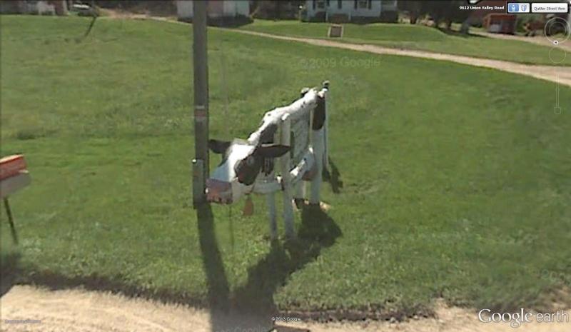 Street View : Les boites aux lettres insolites Vache_10