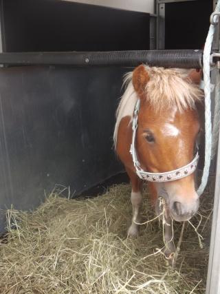 TAGADA - ONC poney typé Shetland né en 2008 - adopté en août 2013 Imga0110