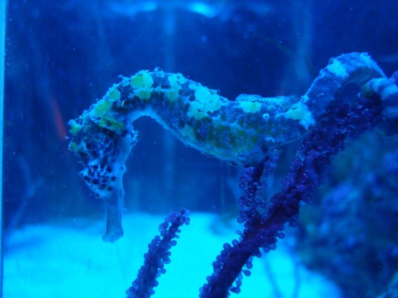 Mon bac a hippocampes Bac_2412