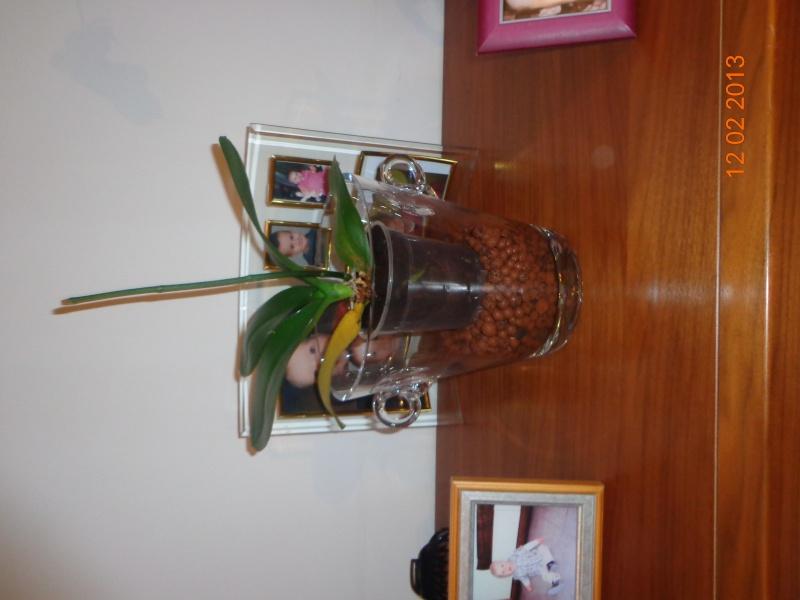 récupération d'une orchidée Dsc01219