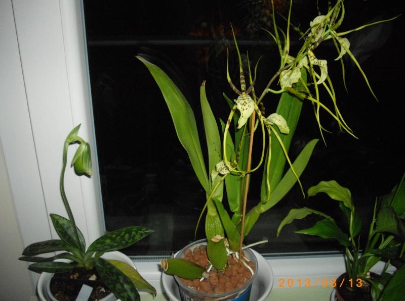 Mes orchidées... par Stape73 - Page 4 Imgp7913