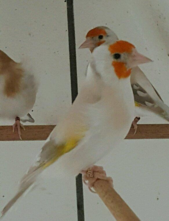 Mes oiseaux  32850711