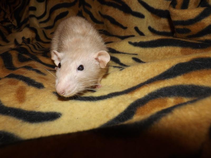 Sauvetage des 25 rats dans les Landes - Page 11 00410