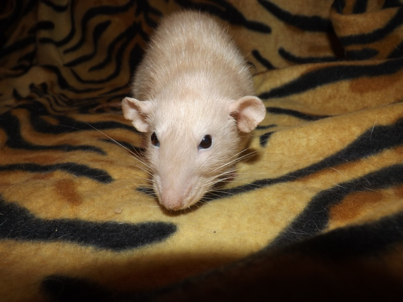 Sauvetage des 25 rats dans les Landes - Page 11 01010