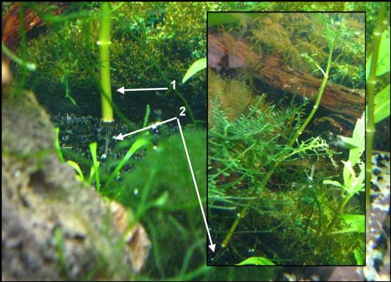 2 problèmes différents sur plantes Hygrop10