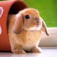 Chiacchiere... Bunnyi10