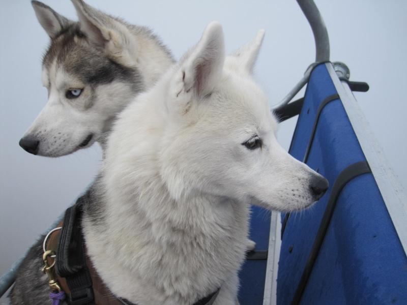 Saskia et Jiro - Page 10 4613