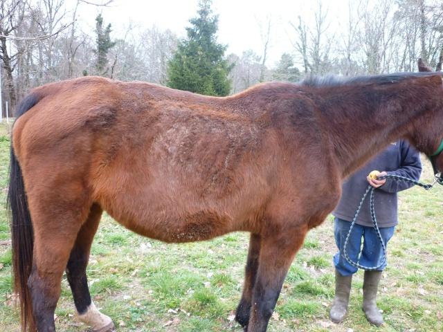 FIGLIANA - TF née en 1993 - adoptée en juin 2011 P1010513