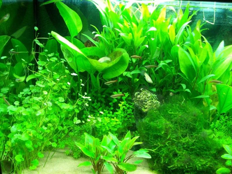 Mes 5 aquariums 000_0010