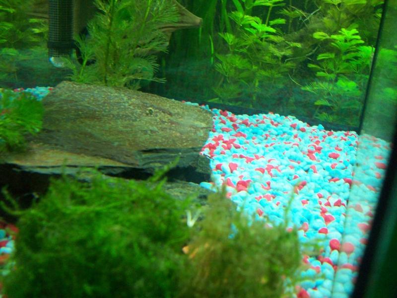 Mes 5 aquariums 000_0012