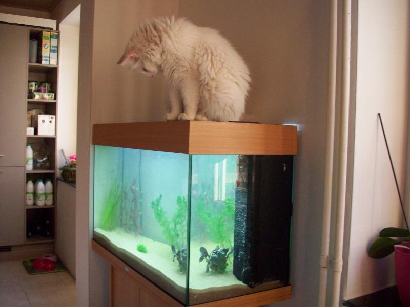 Mes 5 aquariums 100_3910