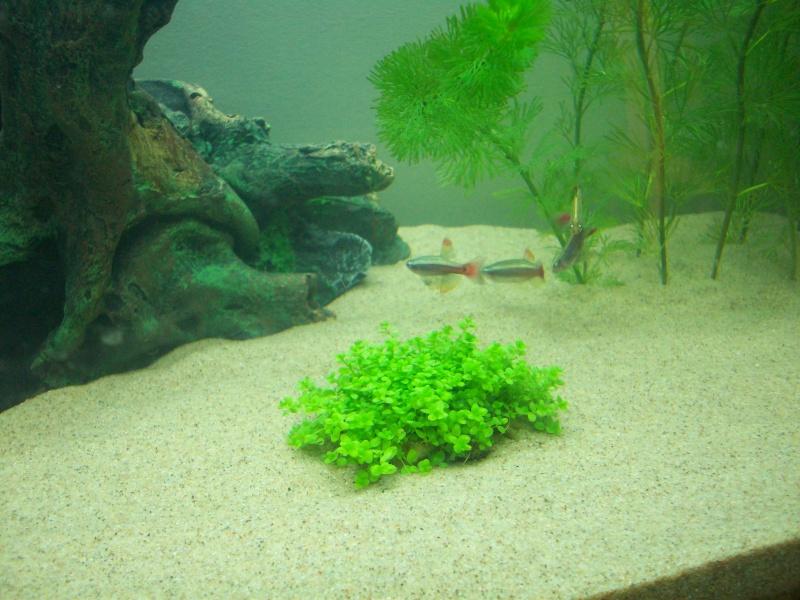 Mes 5 aquariums 100_3911