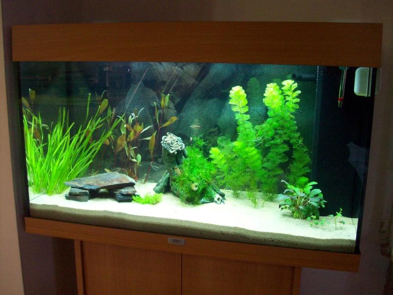 Mes 5 aquariums 100_4110