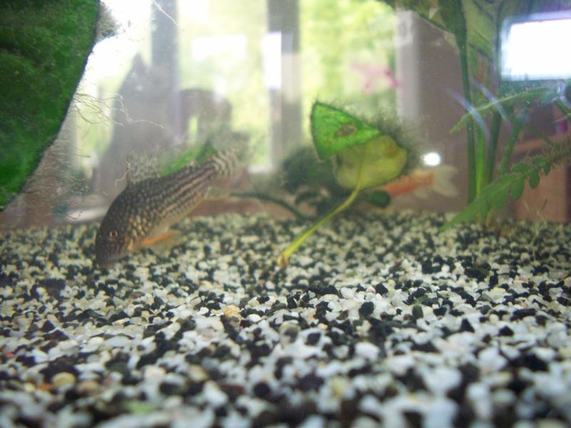 Mes 5 aquariums 100_4710