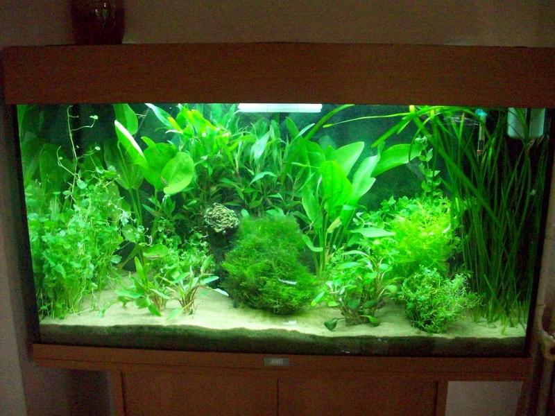 Mes 5 aquariums 100_4910
