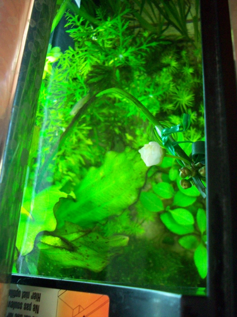 Mes 5 aquariums 100_5111