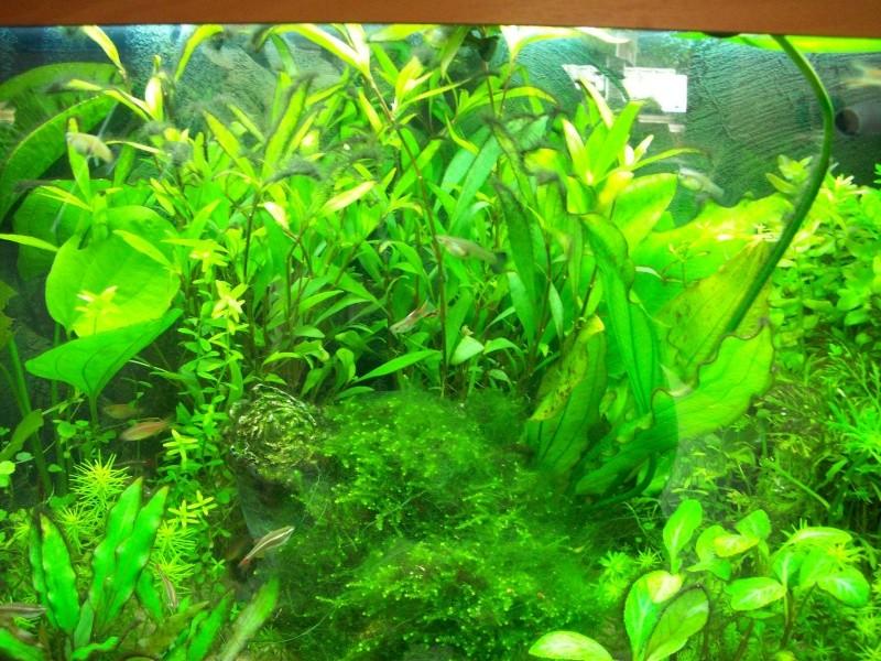 Mes 5 aquariums 100_5112