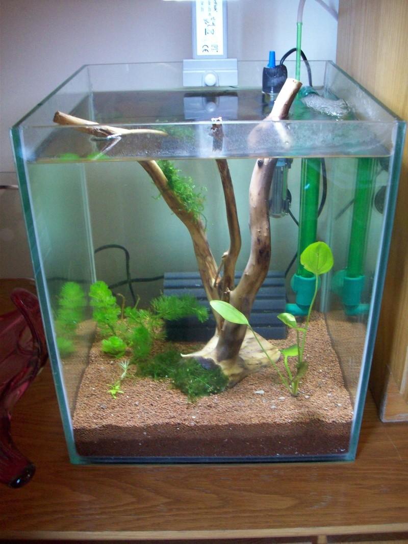 Mes 5 aquariums 100_5113