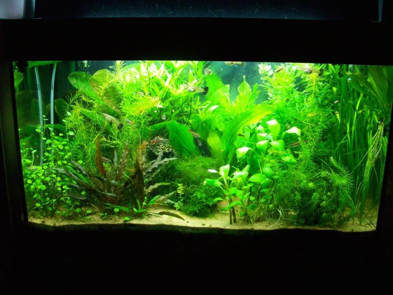 Mes 5 aquariums 100_5210