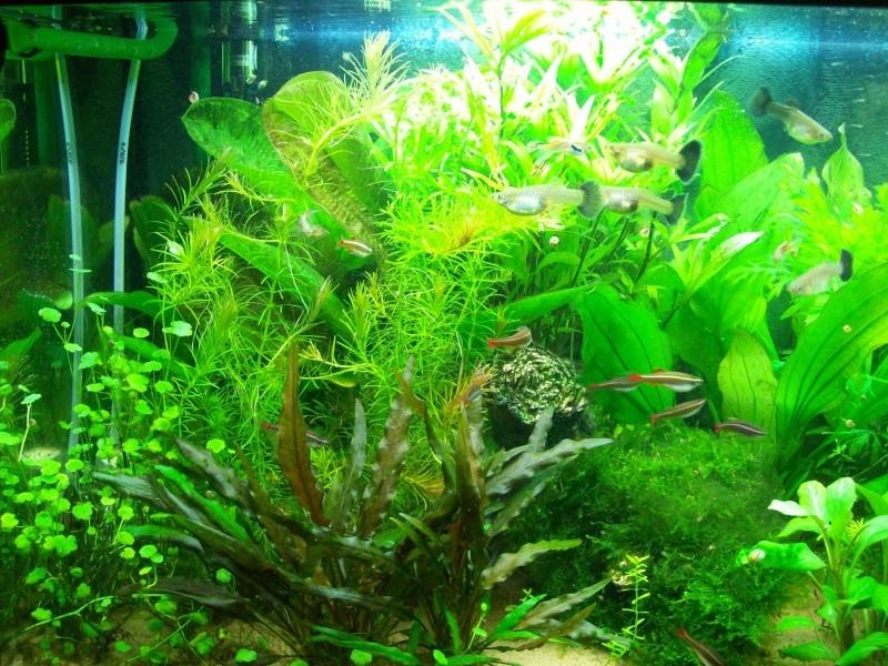 Mes 5 aquariums 100_5212