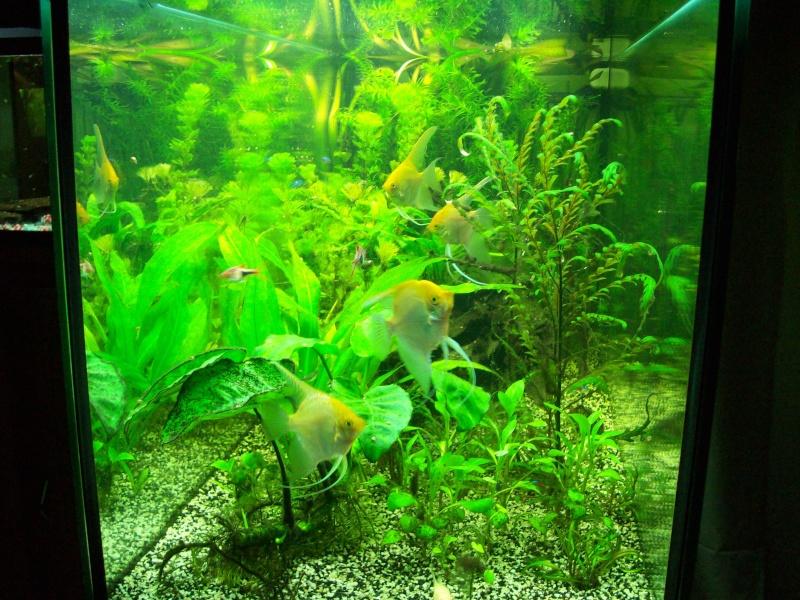 Mes 5 aquariums 100_5216