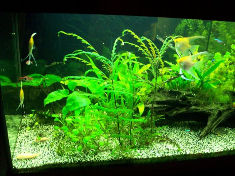 Mes 5 aquariums 100_5217